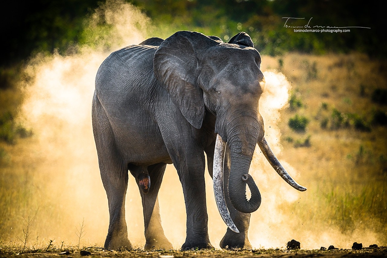 Elephant_Color_038