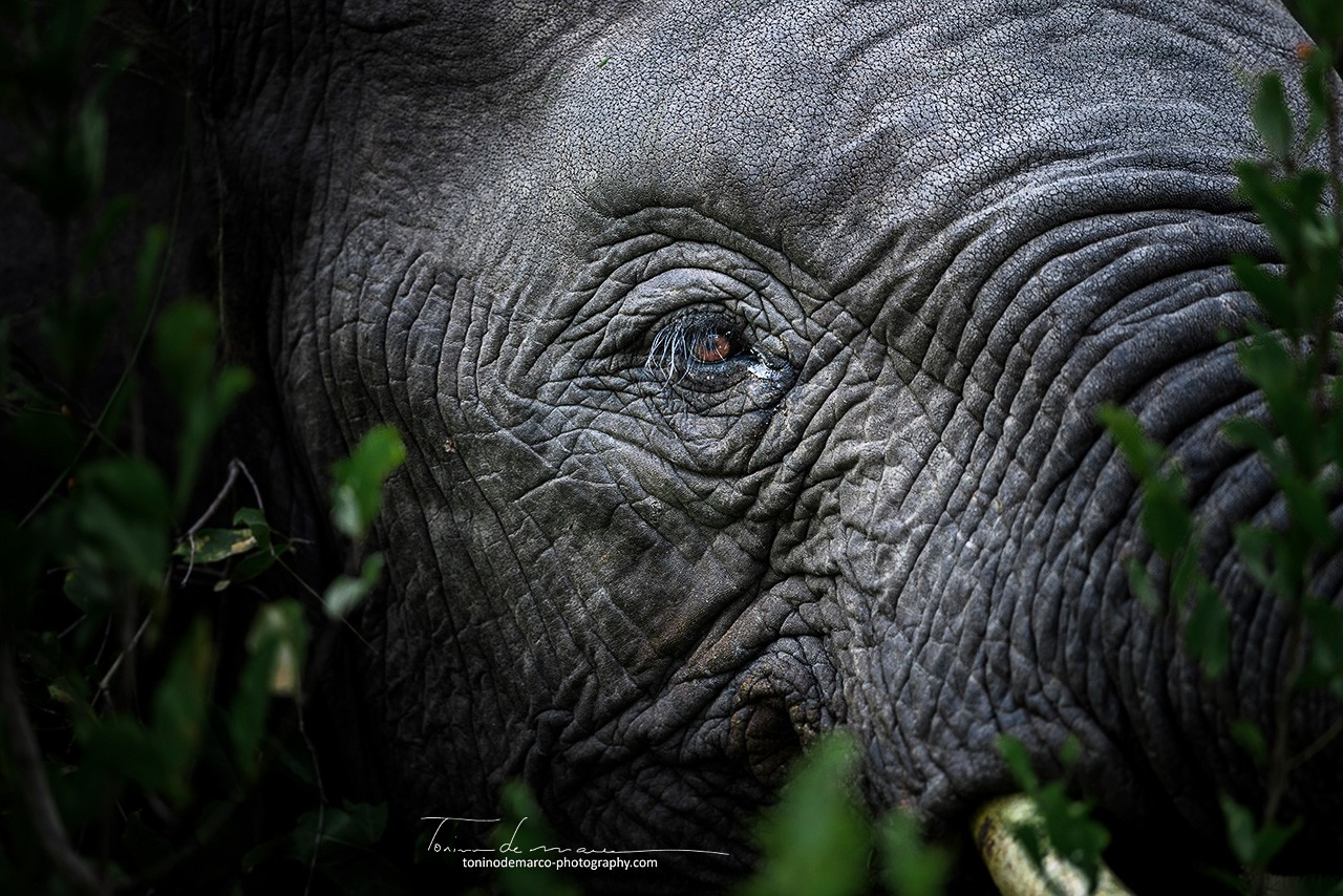 Elephant_Color_044