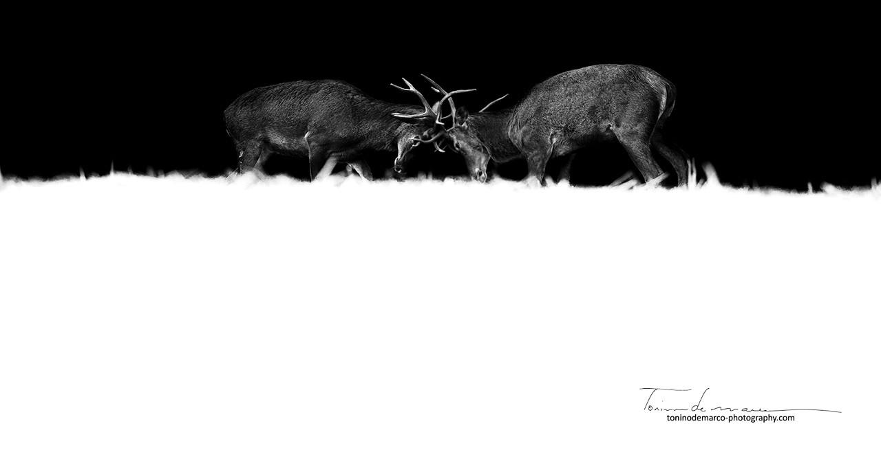 Deer_Cerf_France_028